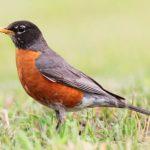 Wisconsin Bird Watching at Justin Trails Resort 17