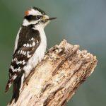 Wisconsin Bird Watching at Justin Trails Resort 7
