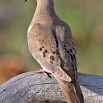 Wisconsin Bird Watching at Justin Trails Resort 16
