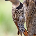 Wisconsin Bird Watching at Justin Trails Resort 8