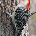 Wisconsin Bird Watching at Justin Trails Resort 14