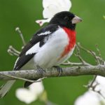 Wisconsin Bird Watching at Justin Trails Resort 6