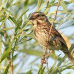 Wisconsin Bird Watching at Justin Trails Resort 12