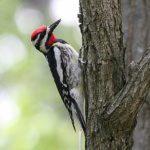 Wisconsin Bird Watching at Justin Trails Resort 11