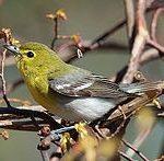 Wisconsin Bird Watching at Justin Trails Resort 1