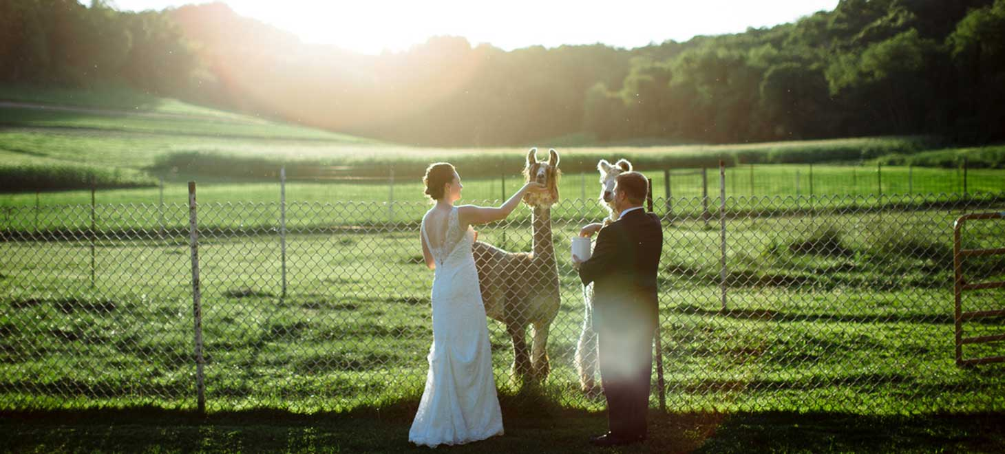 Bride & groom feeding llamas Pet Friendly Cabins in Wisconsin, Justin Trails Resort, Sparta