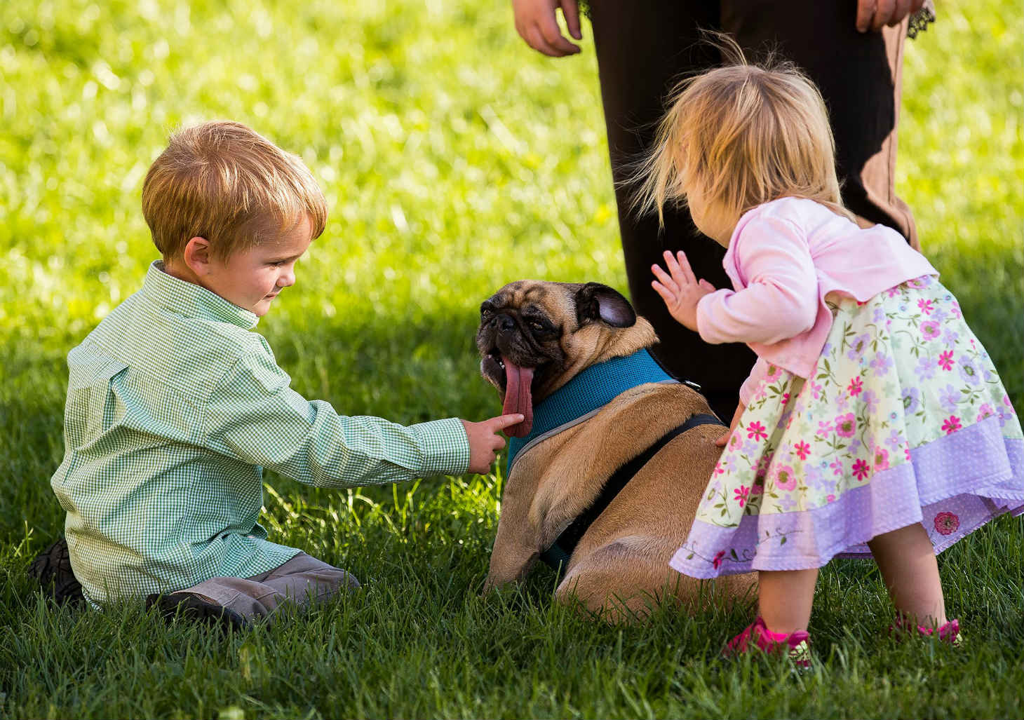 Children enjoying their dog