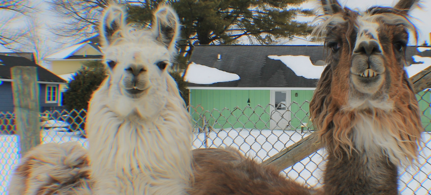 Best Vacation Spots in Driftless Wisconsin with Llamas