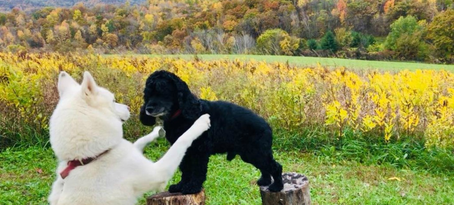 Dog-Friendly Walking Trails at our Wisconsin Bed and Breakfast Resort
