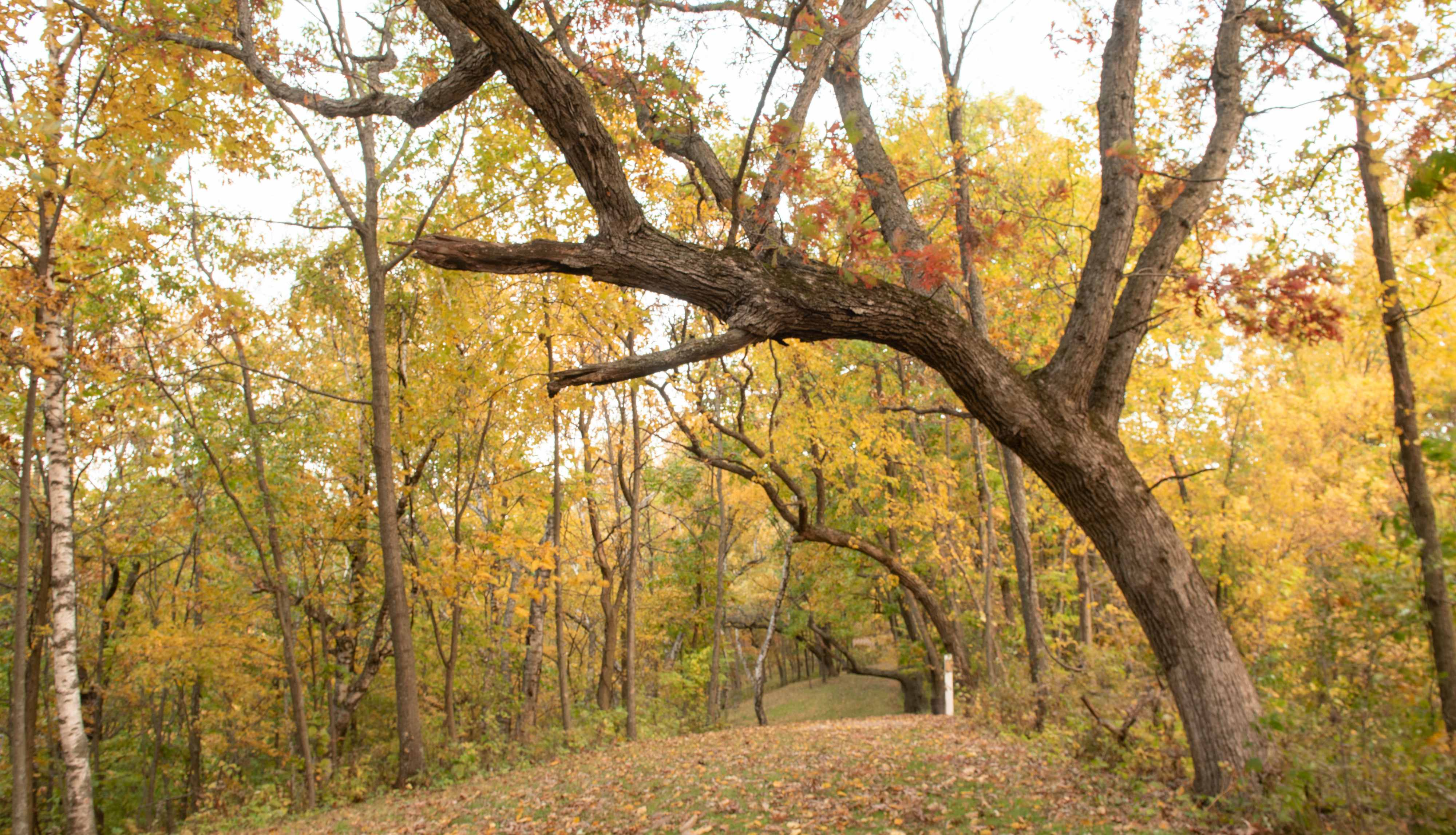 Marker Trees on Doe Chase Trail at Justin Trails Resort